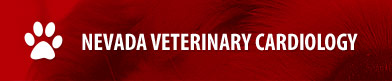 Nevada Veterinary Cardiology
